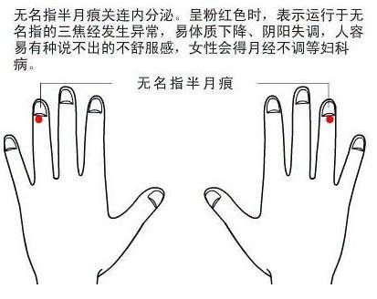 手指甲上的半月痕 隐藏了啥秘密?图片